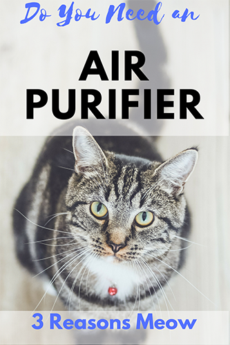 Do I Need an Air Purifier?