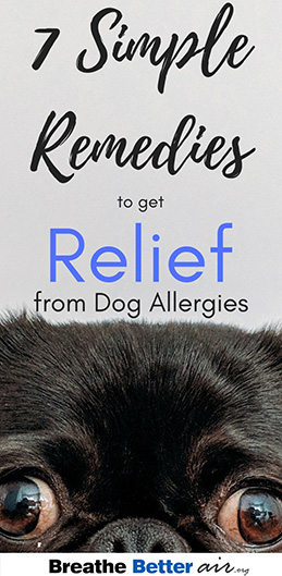 7 Simple remedies to get relief From Dog Allergies