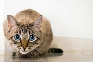 Are Air Purifiers Safe For Cats?