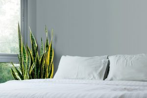 Snake plant benefits in bedroom