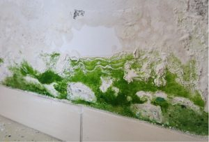 Does an Air Purifier Help with Mold?