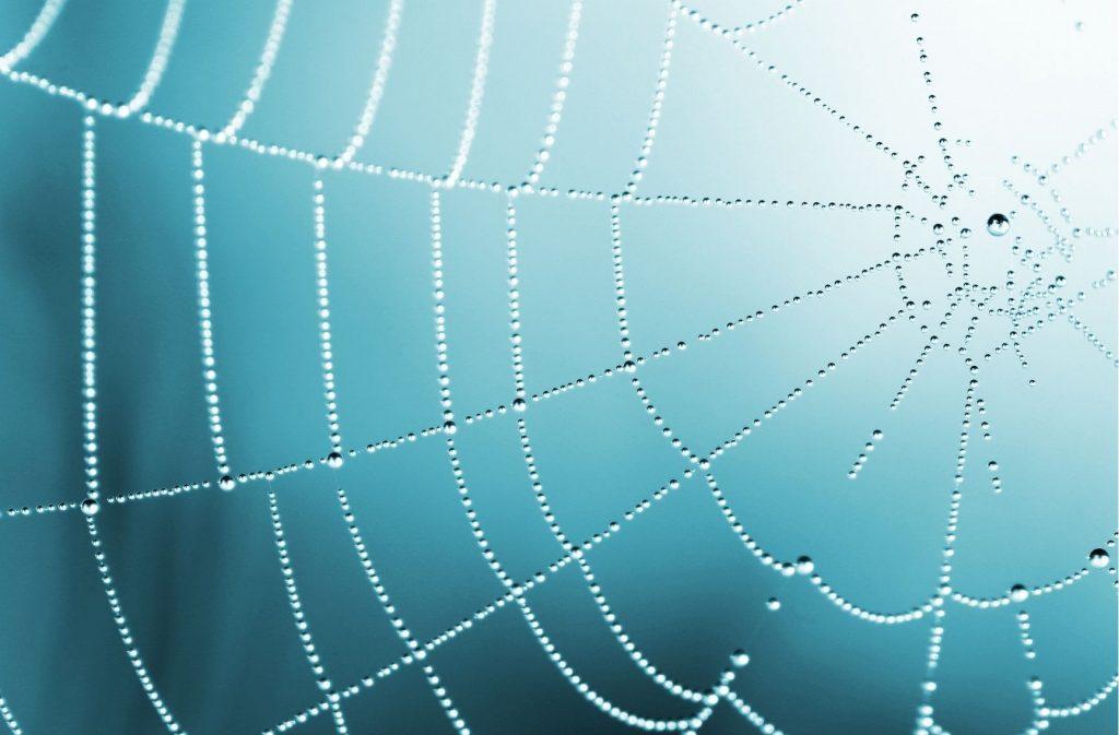 Does hairspray kill spiders