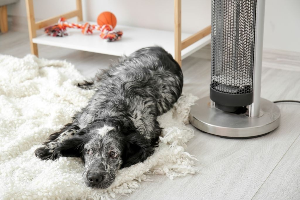 humidity affects dogs