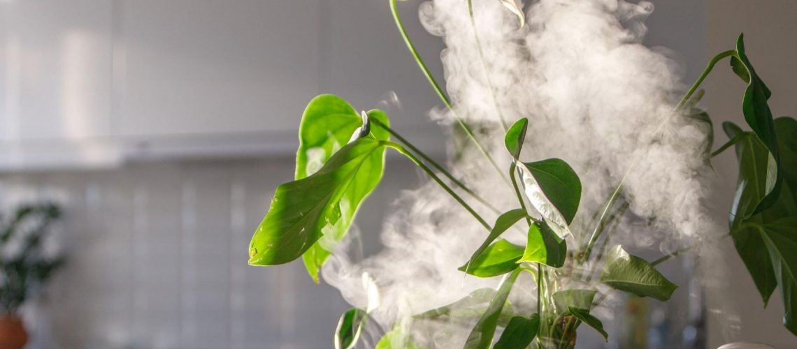 choosing the right humidifier