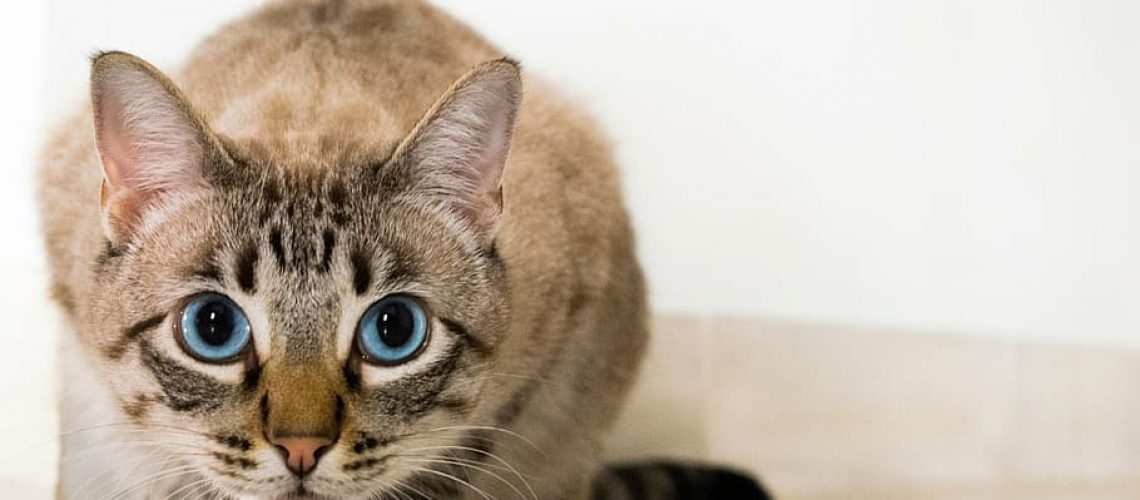 are air purifiers safe for cats